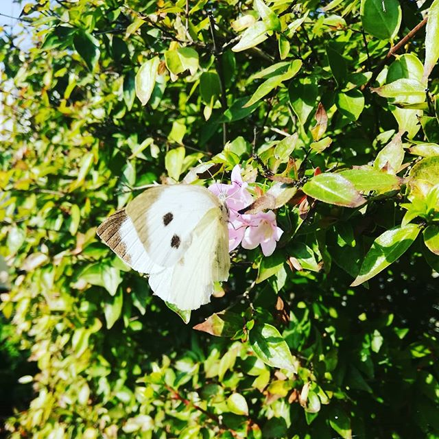 Merveille du jardin ❤️ . . . . . . . . . . . #naturalwonders #naturelovers #natureisamazing #papillon #automne #butterfly #carpediem #dansmonjardin #inmygarden #gardenwonders