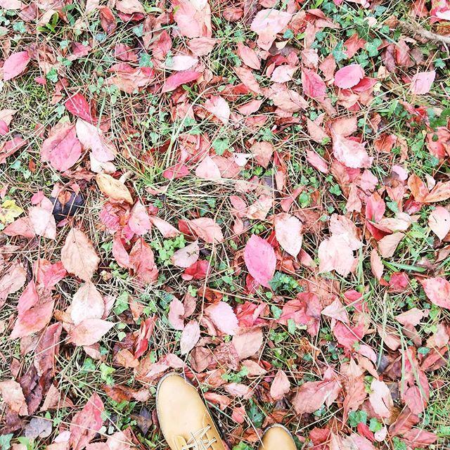 🍁🌳Retour aux basiques🌳🍁 . . . . . . . #automne #autumn #forest #inthewoods #foret #forêt #danslesbois #rouge #red #hije #randonnée #naturelovers #natureisamazing #feuillesmortes