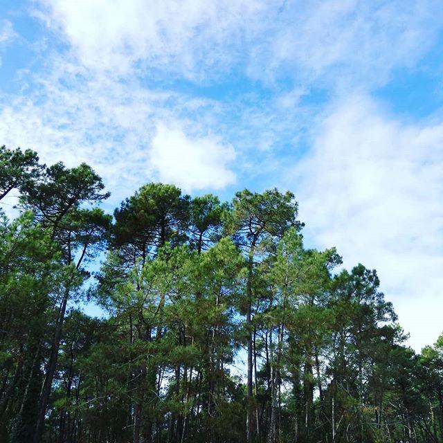 """🌳 La forêt, le meilleur endroit pour se ressourcer😊 Avez-vous déjà entendu parler du """"shinrin yoku""""? 🤔 C'est une méthode de bien-être qui envisage la forêt comme un puissant outil contre la déprime, le stress et la fatigue. Elle est née au Japon mais commence à se faire connaître en France. Un bain de vert, ça vous dit ? . . . . . . . . #anglet #naturelovers #natureisamazing #forest #foret #forêt #bluesky #cielbleu #zerowaste #zerowastelife #zerodechet #paix #sylvotherapie #shirinyoku"""