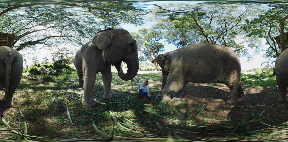 citizen360-elephant.jpg
