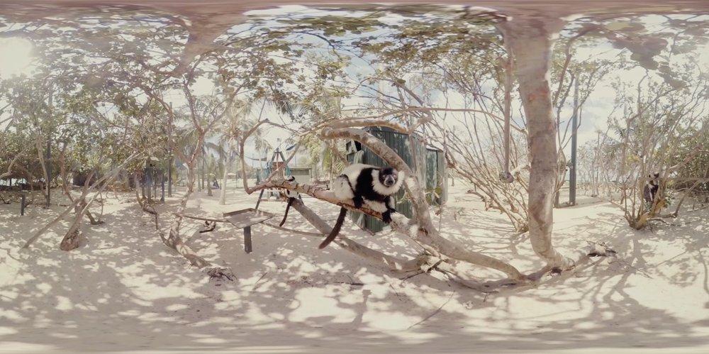 necker-island-lemurs.jpg