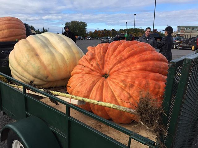 The pumpkinfest parade is about to begin with a bunch of beauties like these in attendance.