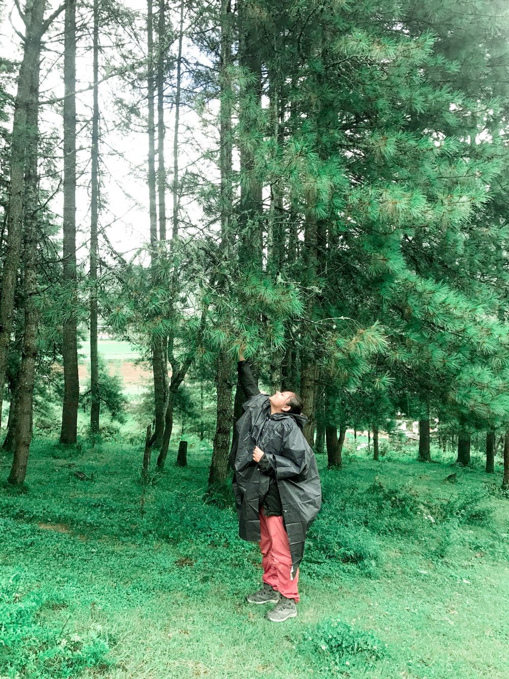 Stopping to enjoy the dew off trees somewhere in a remote valley in Bhutan