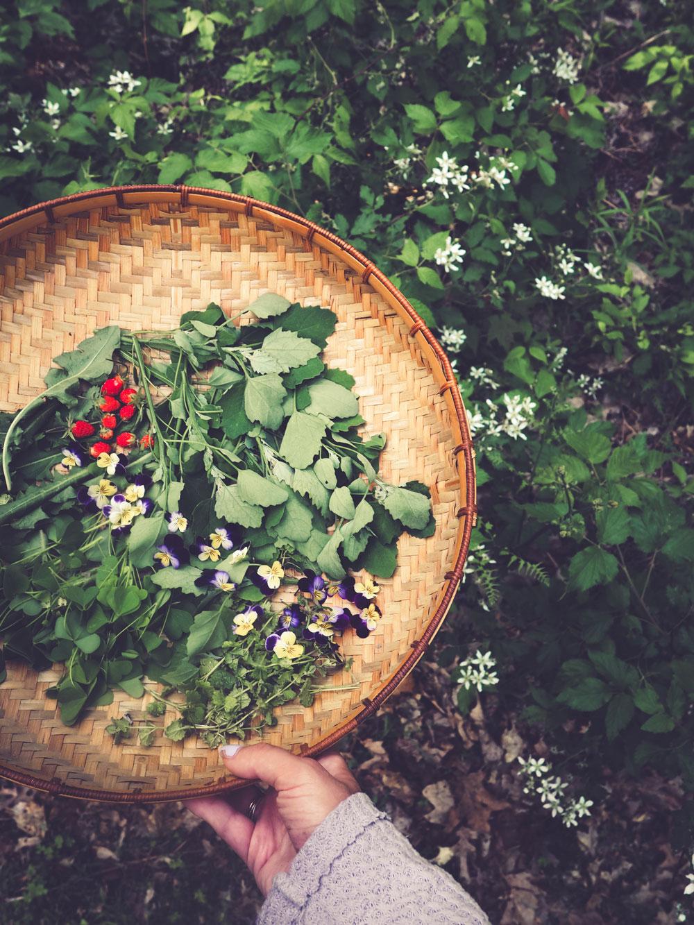 forest medicine -