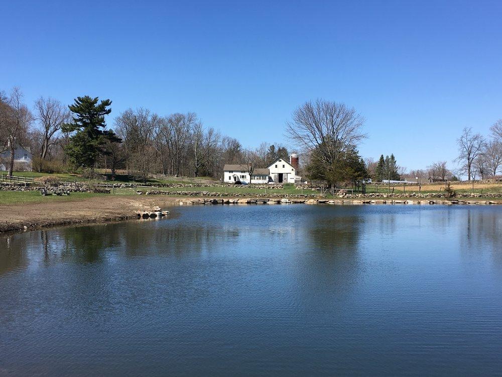Ponds & Wetlands -