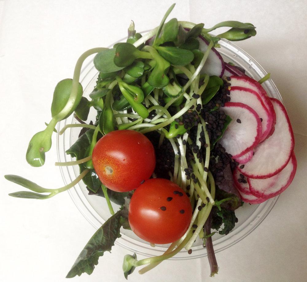 Bby-kael-radish-sunflower-sprouts-tto-black-ses.jpg