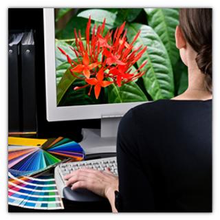 Graphic Design Thumbnail.jpg
