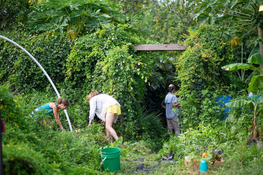 Gaia Gardeners FGCU Food Forest (3 of 42).jpg