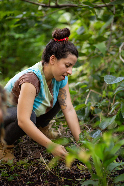 Gaia Gardeners FGCU Food Forest (4 of 42).jpg
