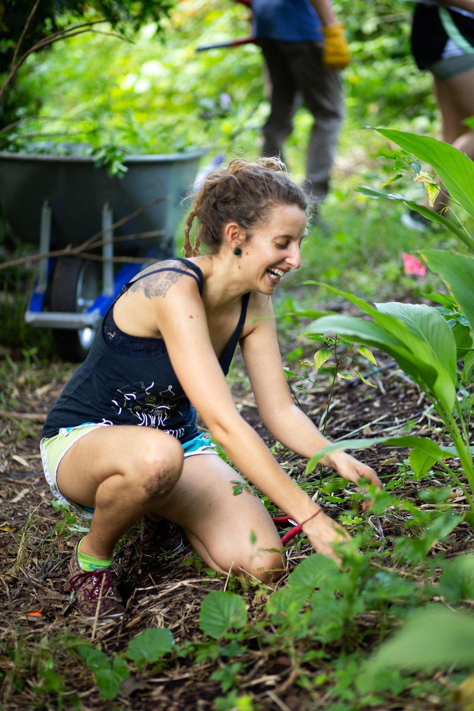 Gaia Gardeners FGCU Food Forest (7 of 42).jpg