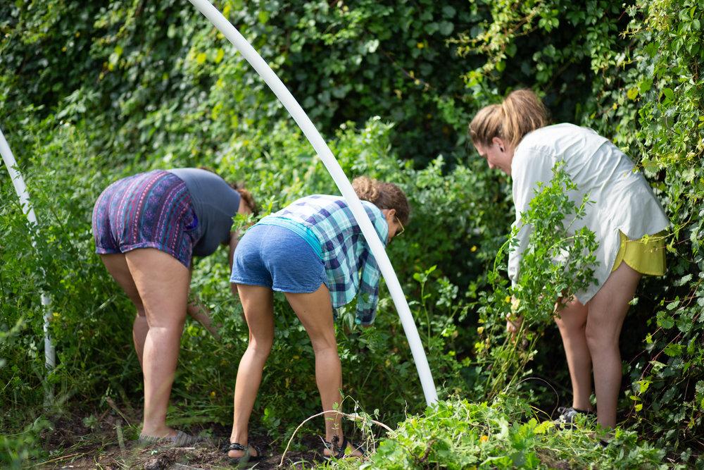 Gaia Gardeners FGCU Food Forest (14 of 42).jpg