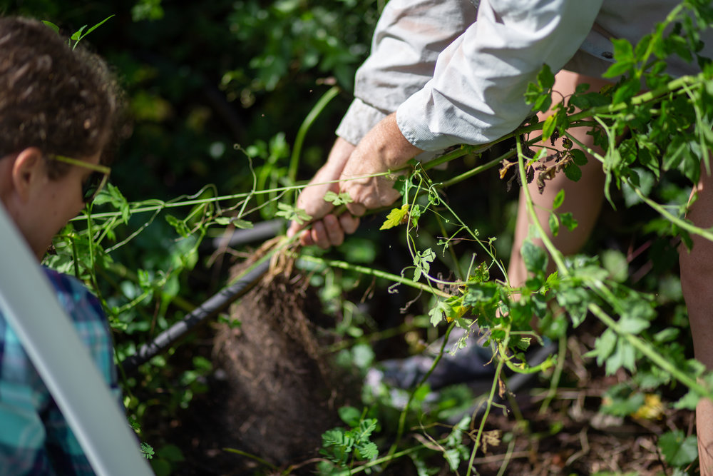 Gaia Gardeners FGCU Food Forest (15 of 42).jpg