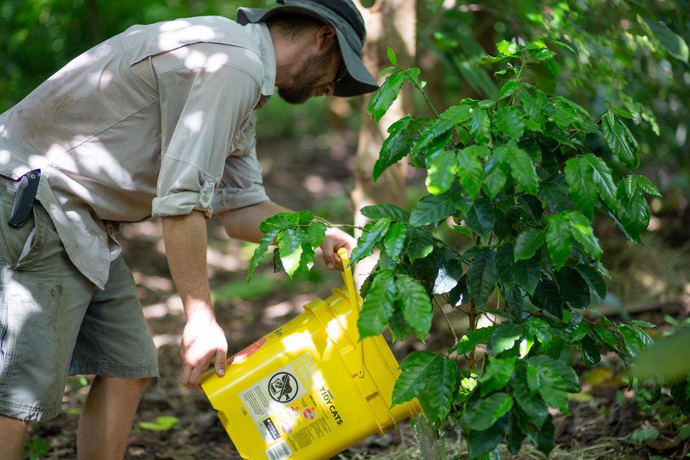 Gaia Gardeners FGCU Food Forest (16 of 42).jpg