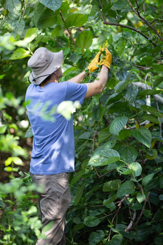 Gaia Gardeners FGCU Food Forest (19 of 42).jpg