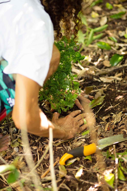 Gaia Gardeners FGCU Food Forest (20 of 42).jpg