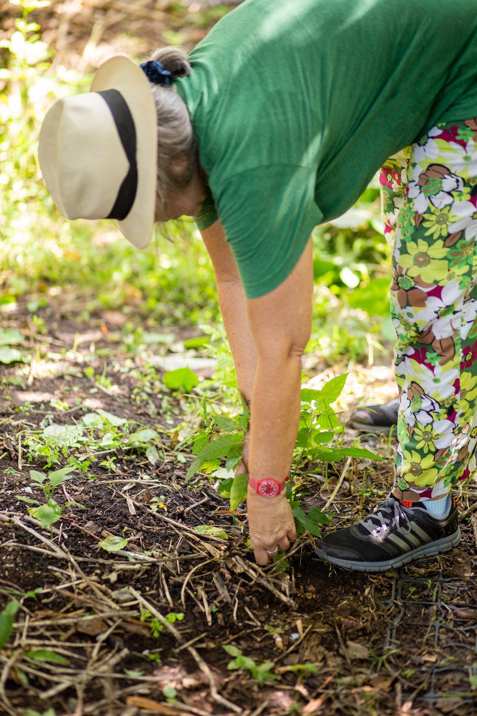 Gaia Gardeners FGCU Food Forest (21 of 42).jpg
