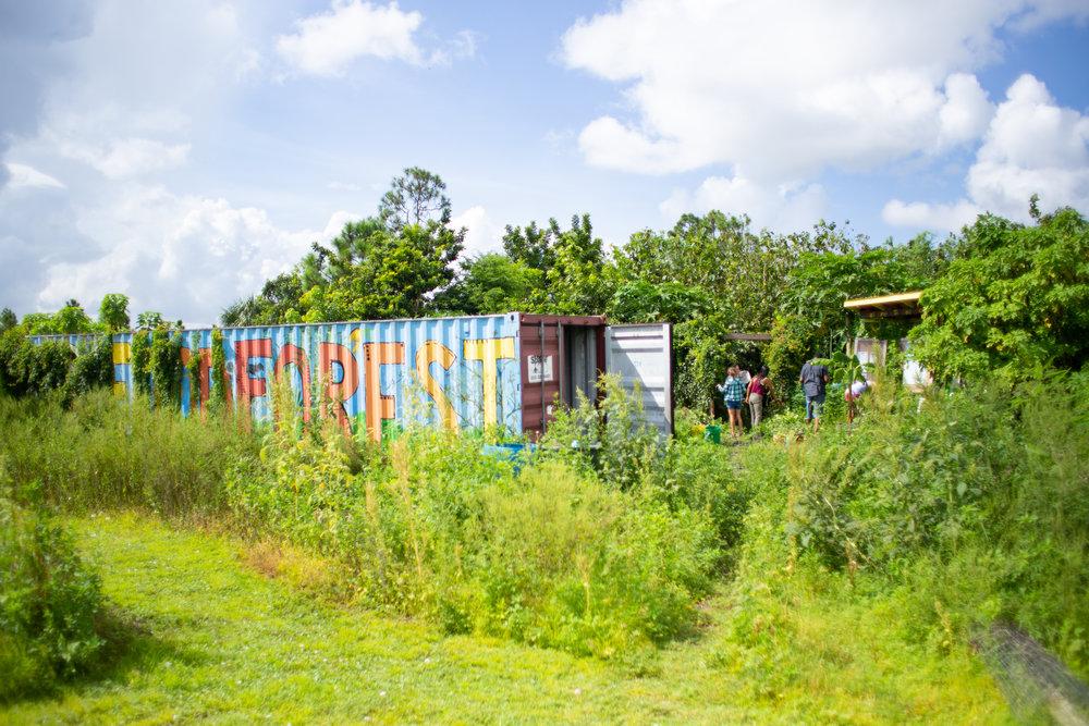 Gaia Gardeners FGCU Food Forest (30 of 42).jpg