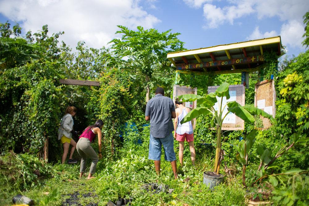Gaia Gardeners FGCU Food Forest (31 of 42).jpg