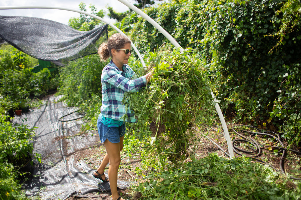 Gaia Gardeners FGCU Food Forest (33 of 42).jpg