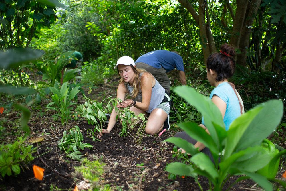 Gaia Gardeners FGCU Food Forest (35 of 42).jpg