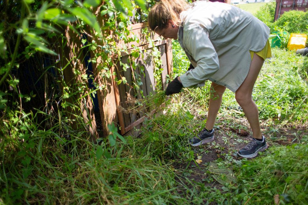 Gaia Gardeners FGCU Food Forest (34 of 42).jpg