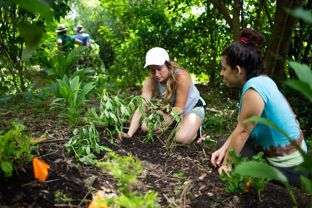 Gaia Gardeners FGCU Food Forest (36 of 42).jpg