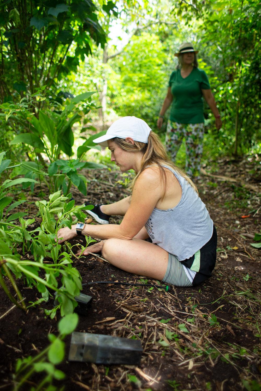 Gaia Gardeners FGCU Food Forest (38 of 42).jpg