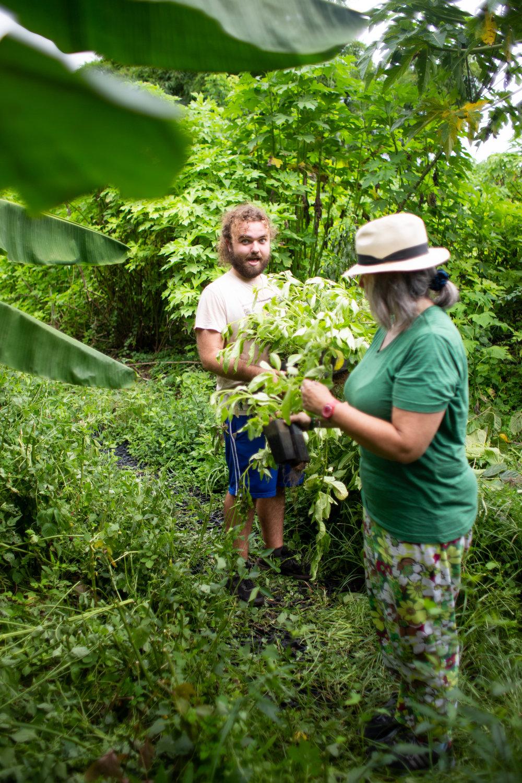 Gaia Gardeners FGCU Food Forest (39 of 42).jpg