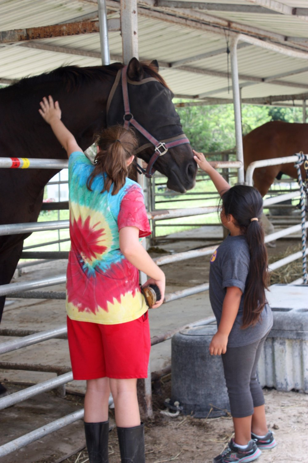 Purple Moose Camp goes to F.R.I.E.N.D.S. Horse Sanctuary Summer 2015