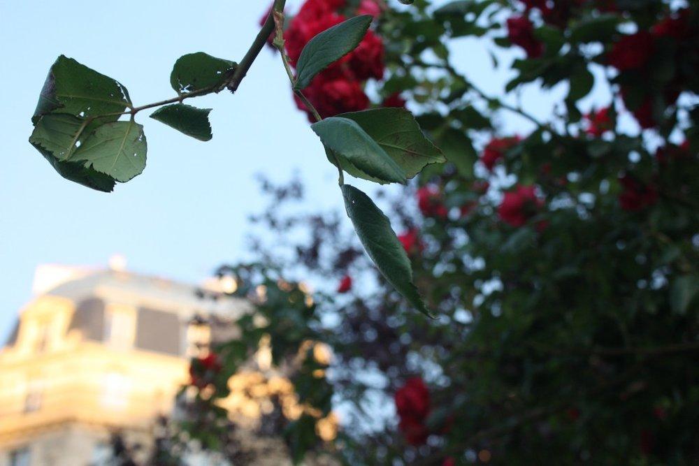Flowers-1024x683.jpg