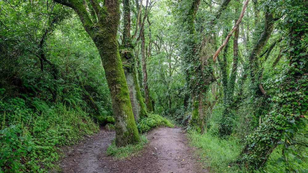 Galician Forest - Camino de Santiago, Spain