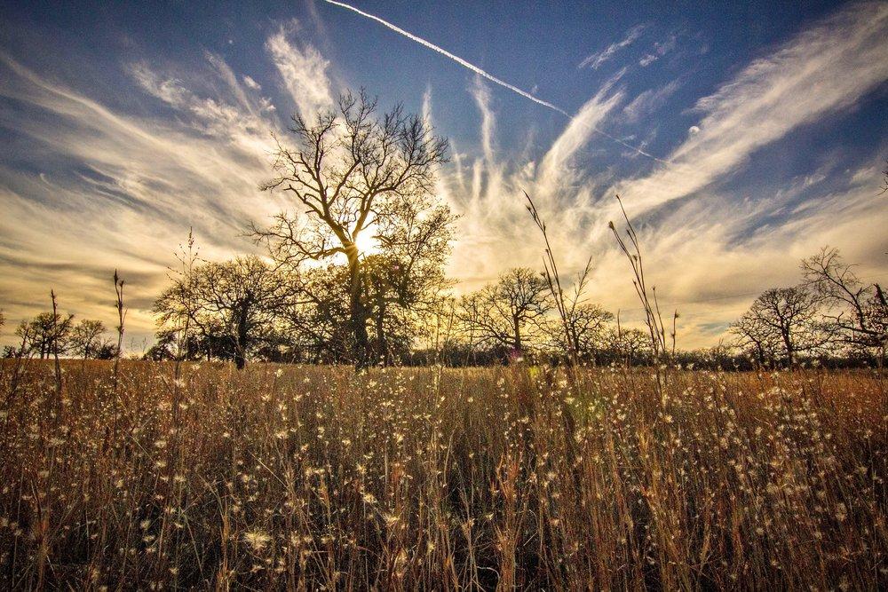 Woolaroc Meadow Sunset