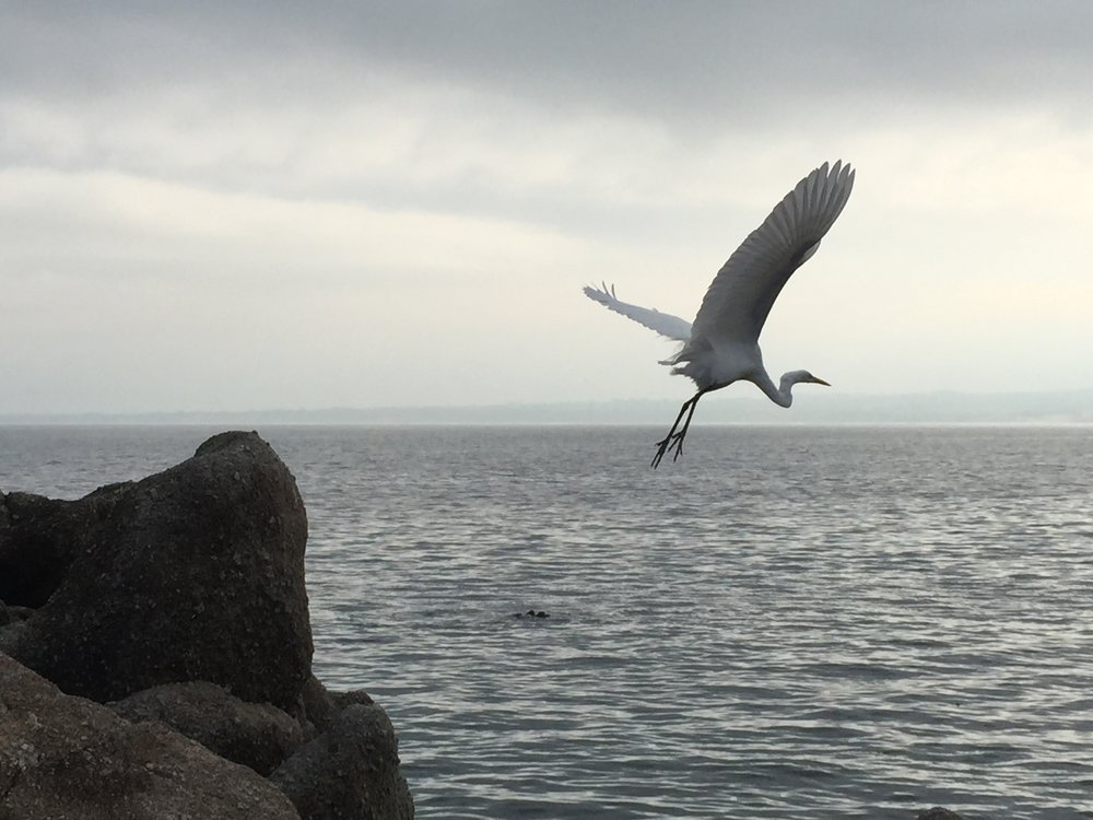 Crane Taking Off
