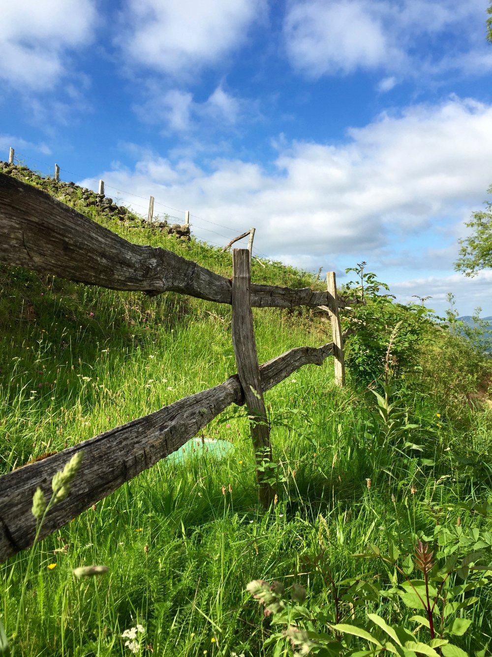 Meadow Fence in the Pyrenees