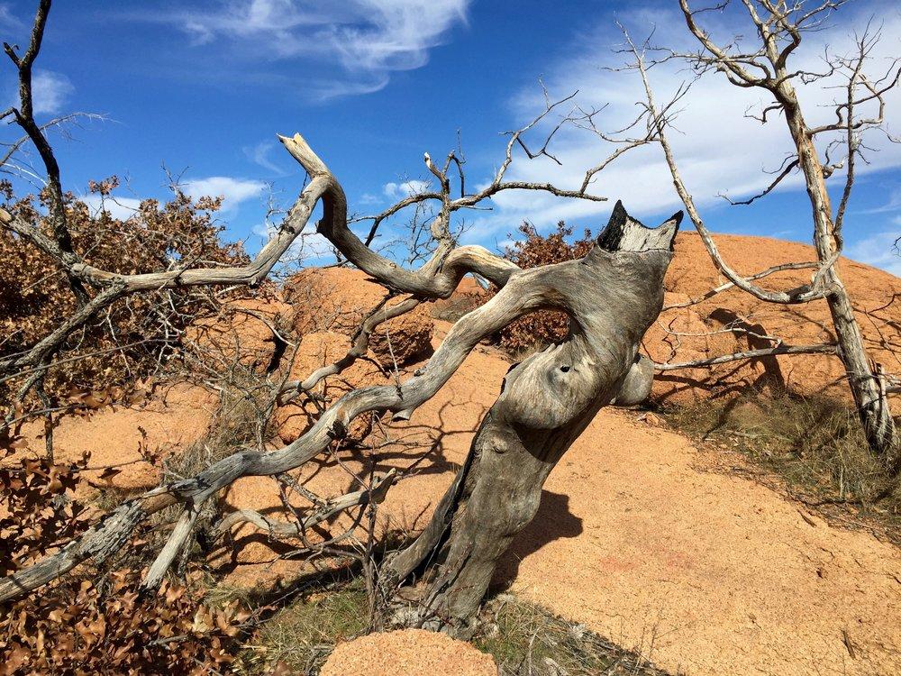 Wichita Mountain Tree