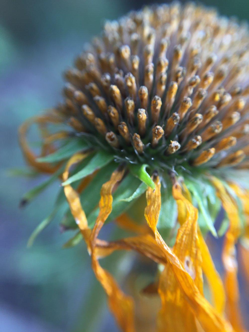 Fall Flower, Macro