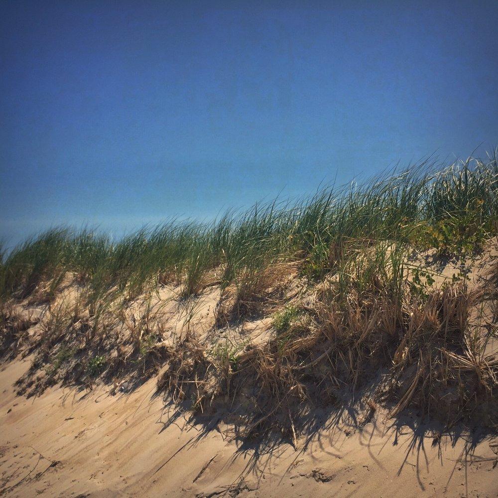 Vineyard Beach Grass