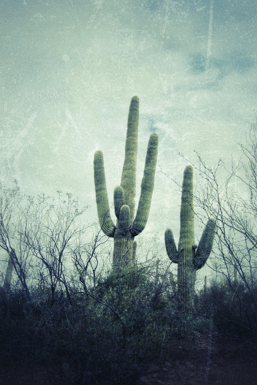Phoenix AZ, Cacti