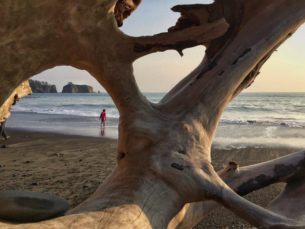 Tree Bones Frame