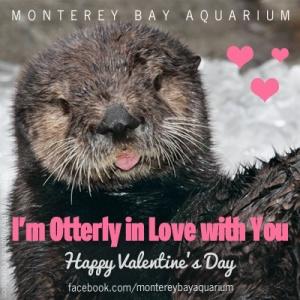 Image via  Monterey Bay Aquarium