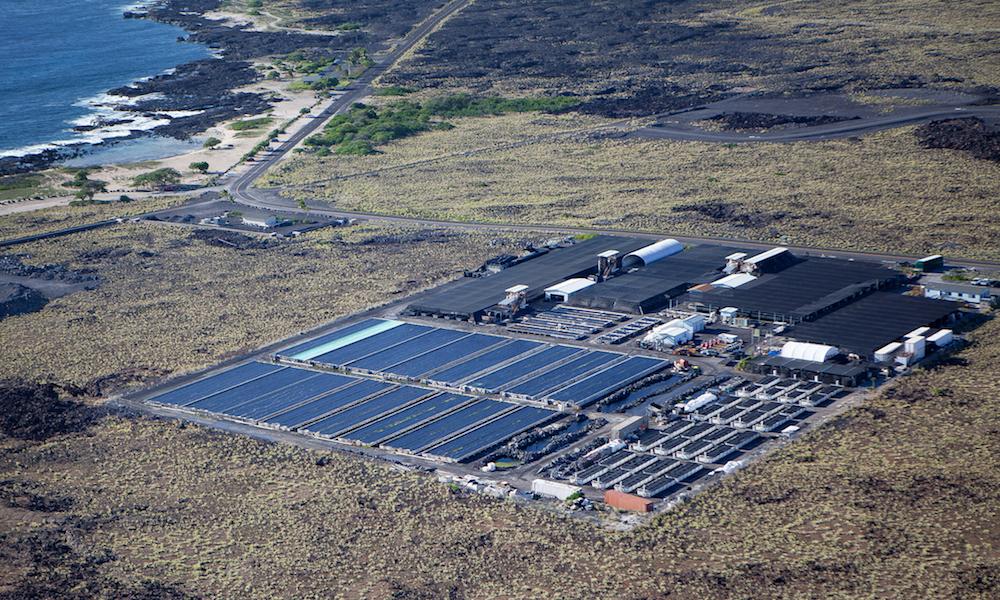 Kona Abalone Factory.jpg