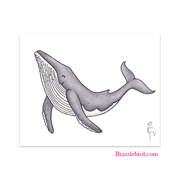 Humpback Whale Thumb.jpg