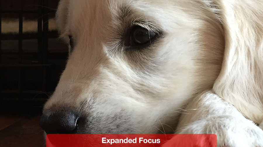 expanded_focus@2x.jpg