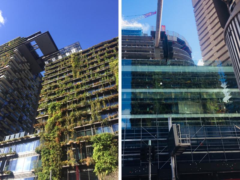 Juxtaposition between a biophilic to biophobic building in Sydney CBD