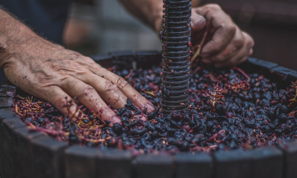 Fermenting the sugar in grapes produces the alcohol in wine