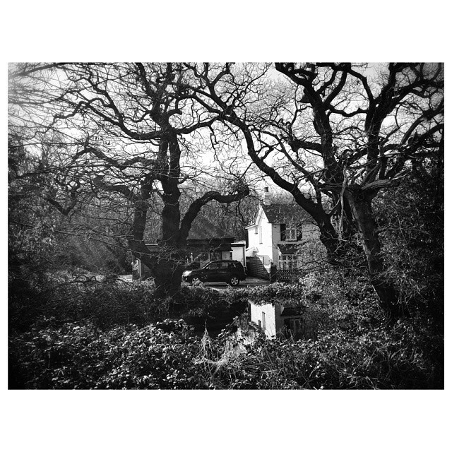 cerebralcausality :     Still reflection. Woodford Green…  #Woodford #Instapic #UnitedKingdom #London #Trees #BlackandWhite #reflection #CountryLiving #Water #Still