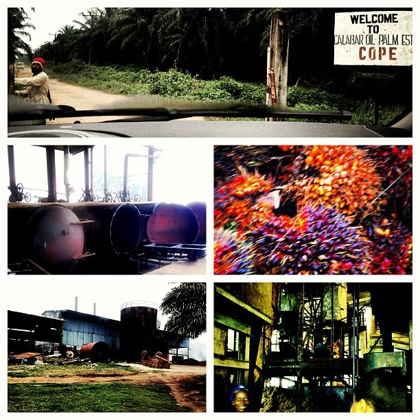 Great day out at #Calabar Oil Palm Estate #FarmLife