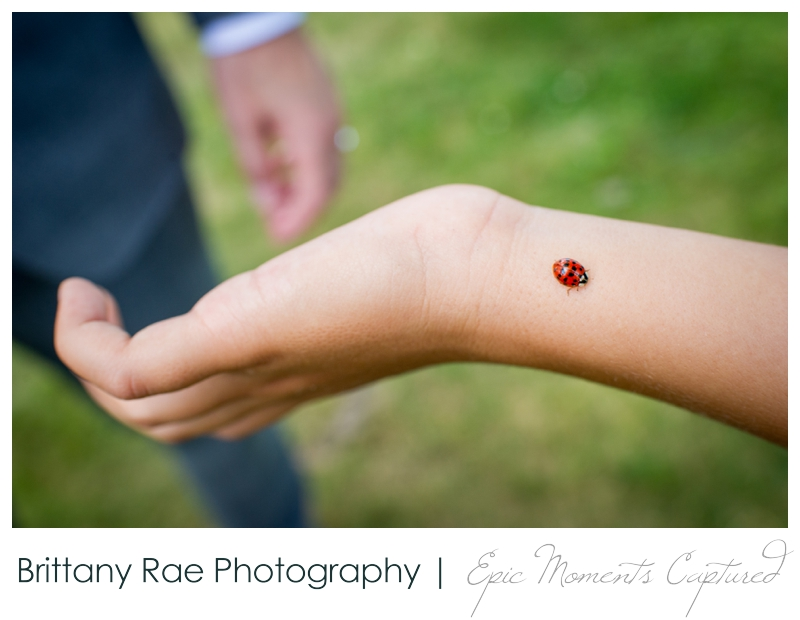 Harborview at Jones Landing Wedding, Peaks Island Maine - ladybug for good luck