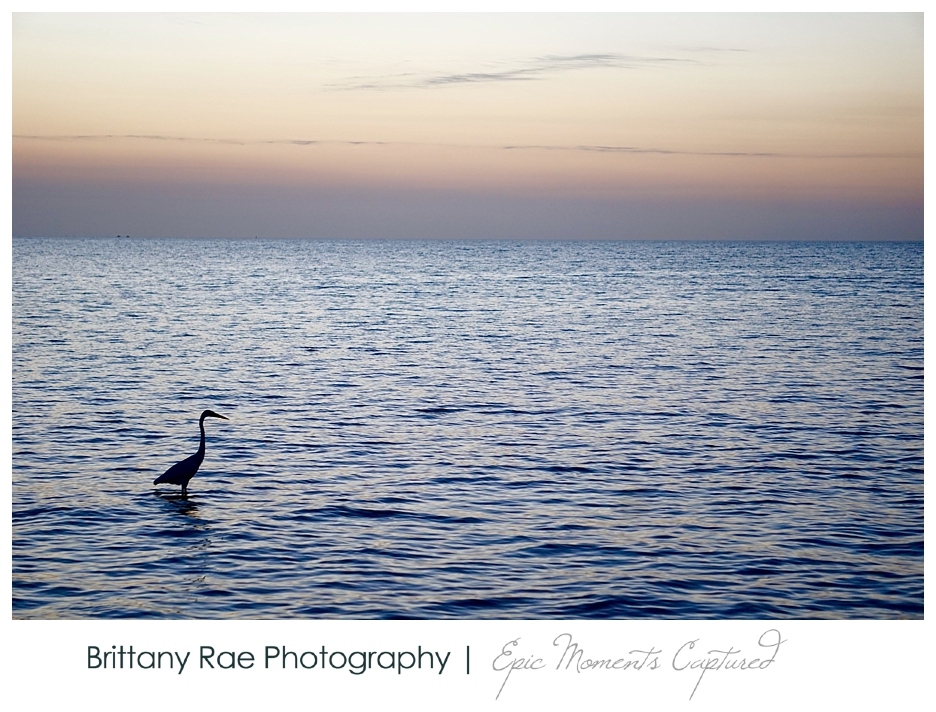 Key West Travel Photographer - Higgs Beach at Sunrise, Egret