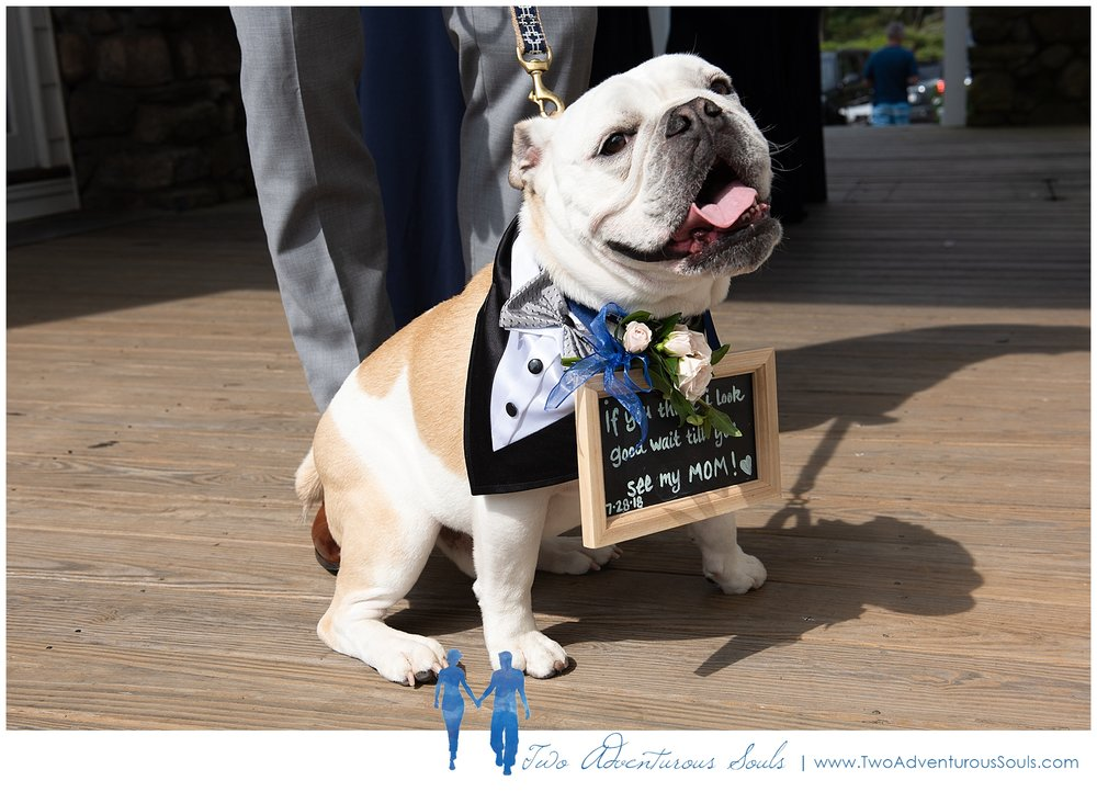 Colony Hotel Wedding, Kennebunkport Wedding Photographers, maine Wedding Photographers - dog ring bearer